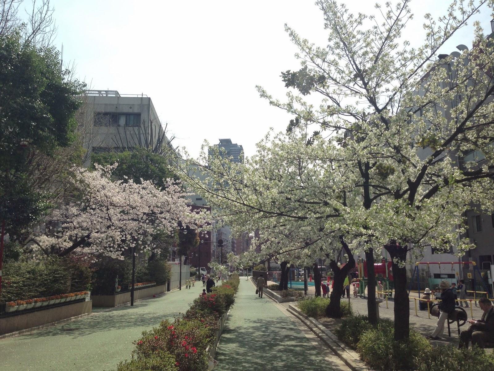 人形町で桜を満喫
