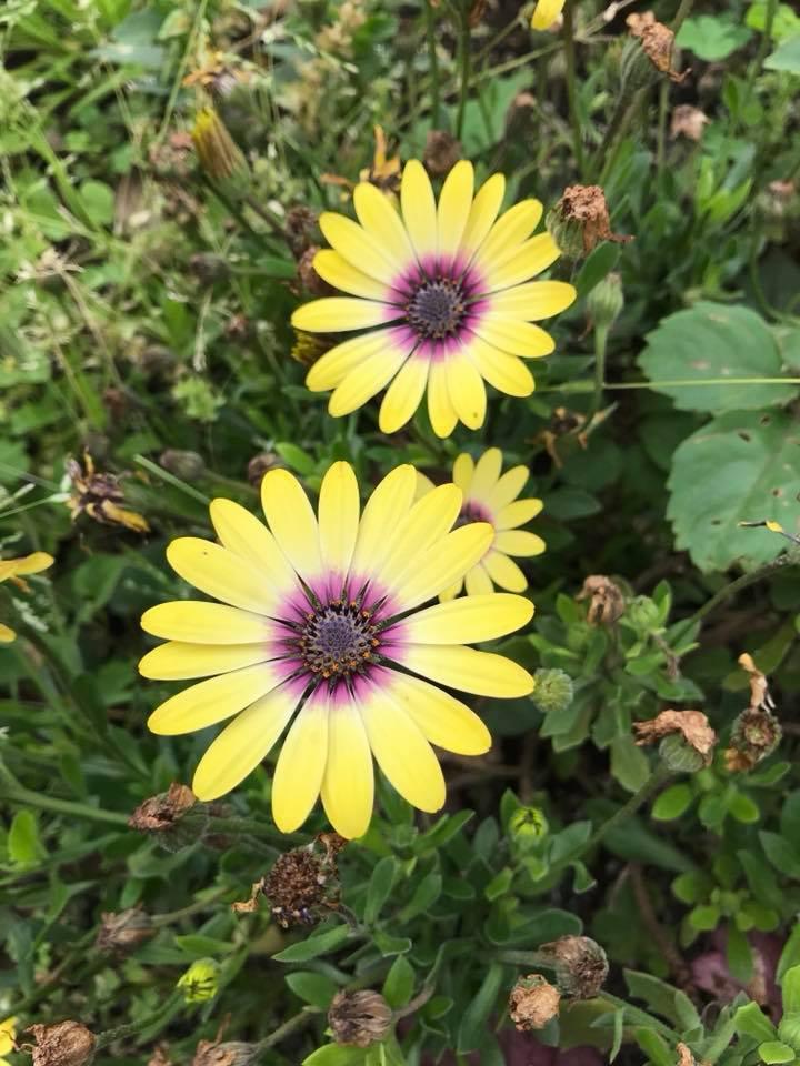 花の名前を憶えています